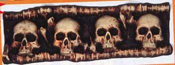 Skull Display Horizontal