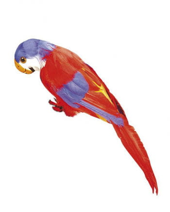 Feathery parrot red and blue