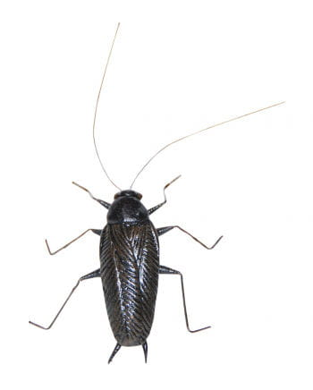 Realistic cockroach with Magnet