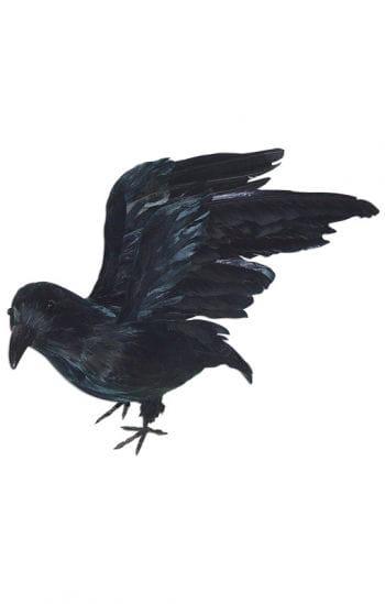 Rabe mit gespreizten Flügeln
