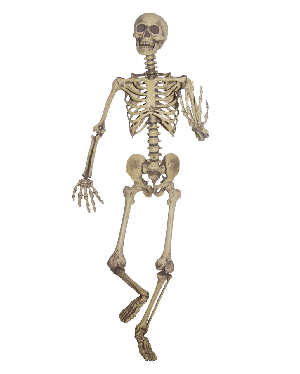 flexible skeleton life-size halloween deco | horror-shop