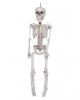 Skeleton Hanging Figure 30 Cm