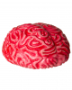Life Size Squeeze Brain