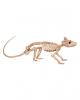 Ratten Skelett
