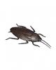 Riesen Kakerlake 12 cm