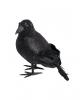 Black Glitter Raven