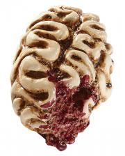 Eaten Zombie Brain