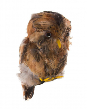 Brown Owl As Decoration
