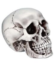 Beige Skull