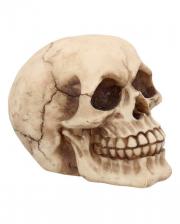 Small Grinning Skull 12cm