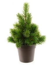 Fir tree in pot