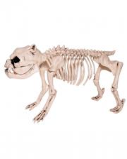 Pug Skeleton