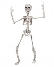 Positionierbares Knochenskelett 50cm