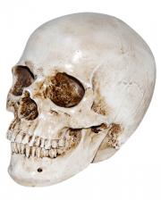 Realistic Artificial Stone Skull