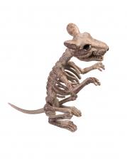 Sitzende Skelett Ratte