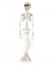 Skeletonized Mermaid 45cm