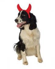 Devil's horns for animals