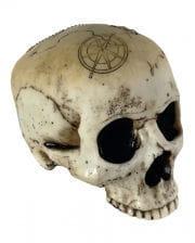 Skull with treasure map