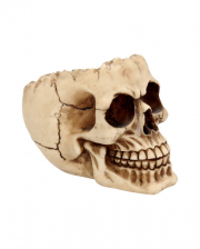 Skull Bowl With Open Skullcap