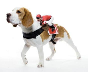 Jockey Dog Costume