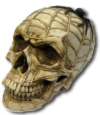 Spider and Cobweb Skull
