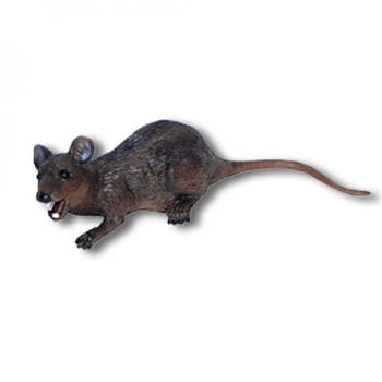 Liegende Latex Ratte