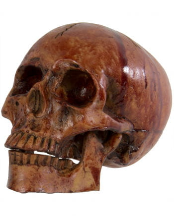 Bloody Skull With Moving Jaw
