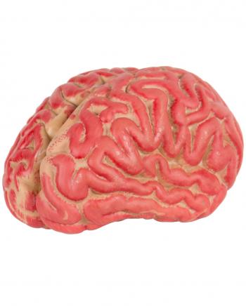 Blutiges Gehirn 15cm - Vinyl für Halloween | Horror-Shop.com