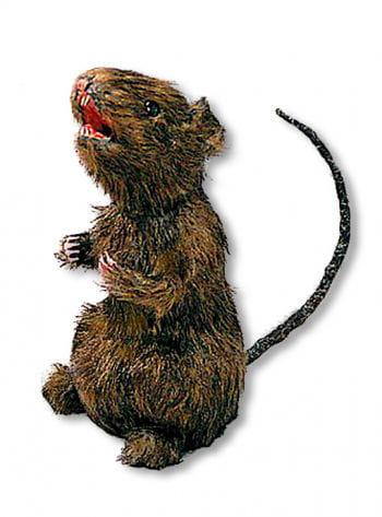 Hairy Rat Standing