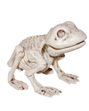 Toad skeleton