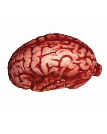 Frisches Gehirn