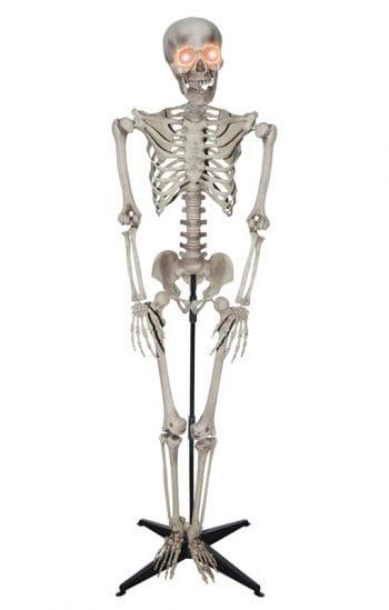 Realistic Skeleton standing figure