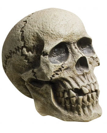 Rotting Skull Dead skull
