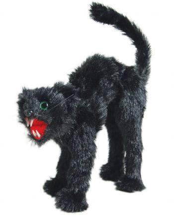 Black humpbacked cat