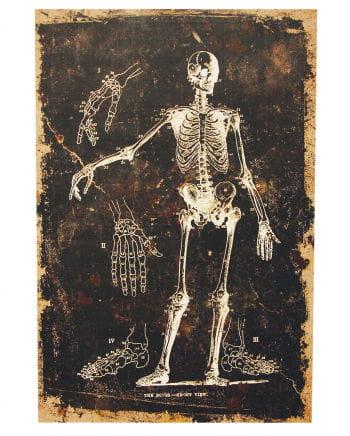 Skelett - Leinwanddruck