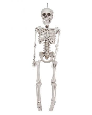 Skeleton Hanging Prop