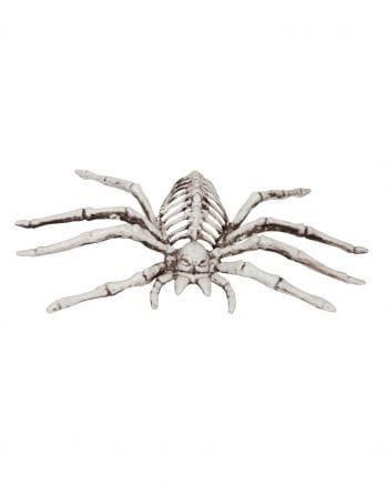 Spinnen Skelett