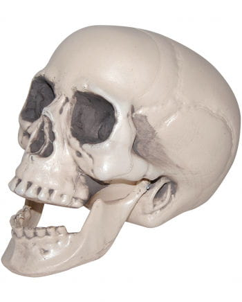 Skull With Movable Lower Jaw