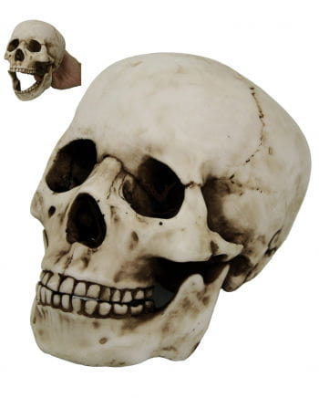 Dead skull with moving jaw