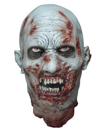 Isolated Zombie Head