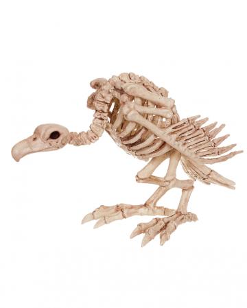 Aasgeier Skelett