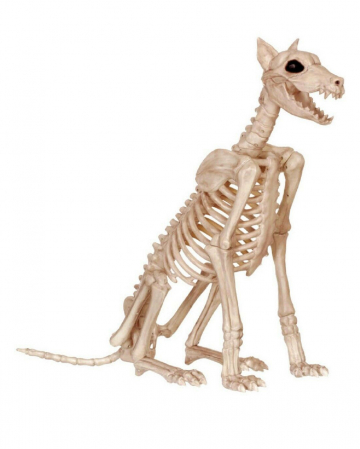 Dobermann Skelett