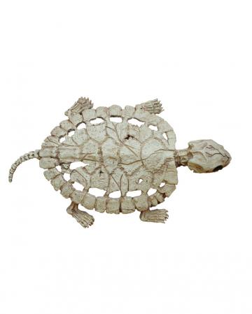 Schildkröten Skelett