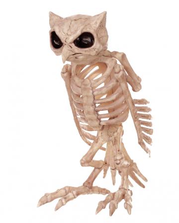 Eulen Skelett