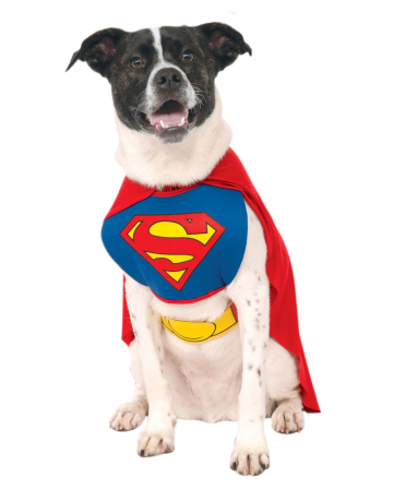 Superman Dog Costume L