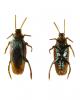 Kakerlake als Scherzartikel