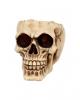 Totenschädel Schale mit offener Schädeldecke