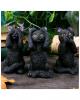 Three Wise Black Cats