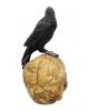 Salem Skull With Raven