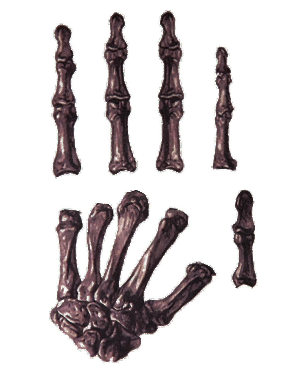handtattoo skelett skelett tattoo f r halloween horror. Black Bedroom Furniture Sets. Home Design Ideas